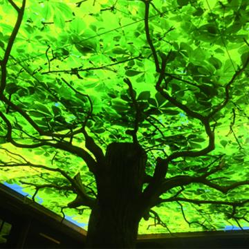 Biergarten Baumkrone Lichtdecke Beleuchtung