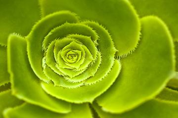 Pflanze_16_Wurz_1320x867mm