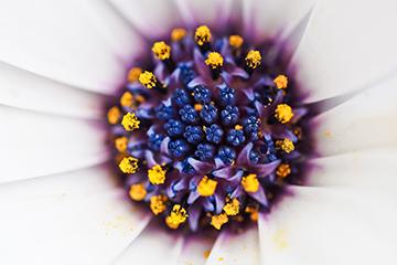 Pflanze_5_weiss_nah_1847x1218mm