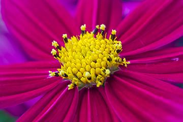 Pflanze_7_pink_nah_1847x1218mm