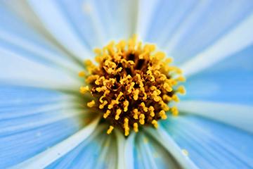 Pflanze_8_weiss_nah_1847x1218mm