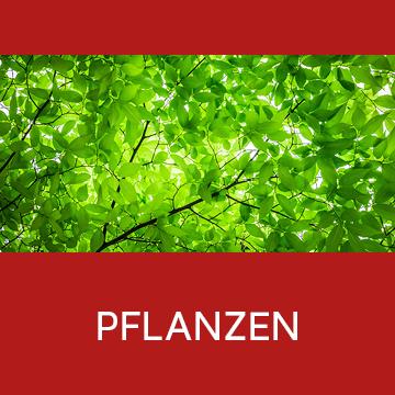 Galerie Kategorie Pflanzen