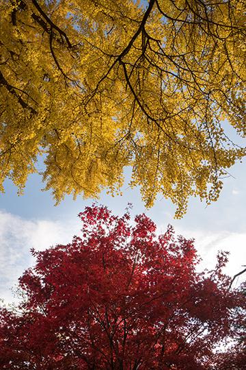 Herbst_12_1598x2418mm
