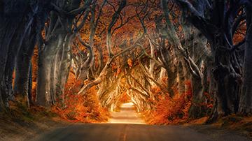 Herbst_14_2805x1560mm