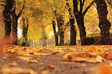 Herbst_16_2083x1375mm