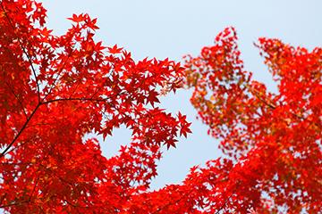 Herbst_8_1100x1130mm