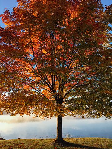 Herbst_9_1198x1611mm