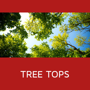 gallery category tree tops