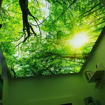 Praxisbeleuchtung: Deckenbild Baumkronen