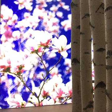 Praxisbeleuchtung: Wandbild Blüten, dekorativ